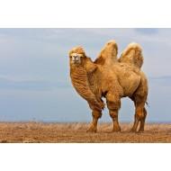 """Одеяла """" Верблюжья шерсть"""""""